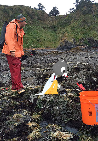 Scientist Michael Berger looks for barnacles at the tidepool. Dr. Universe photoshopped in looking for barnacles, too.