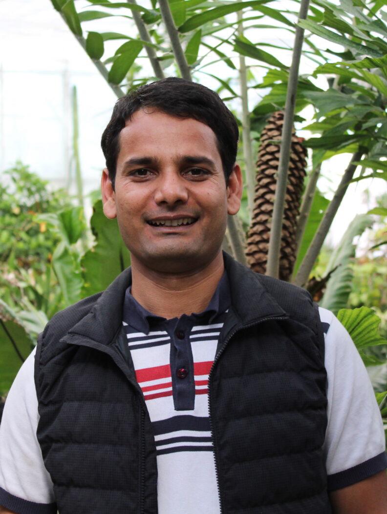 Bala, a WSU scientist, in the greenhouse.