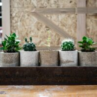 Plant pots made out of drywall materials.