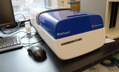 Blue Pippen