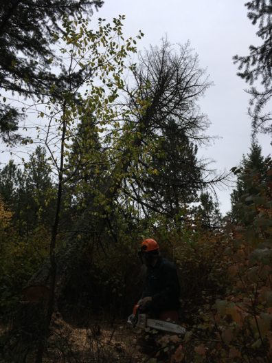 Man with chainsaw in forest