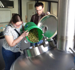 WSU researcher Ruth Henderson pours hops into a tank at the Sierra Nevada Brewing Company in Chico, Calif., as Abe Kabakoff, Sierra Nevada head pilot brewer, looks on.