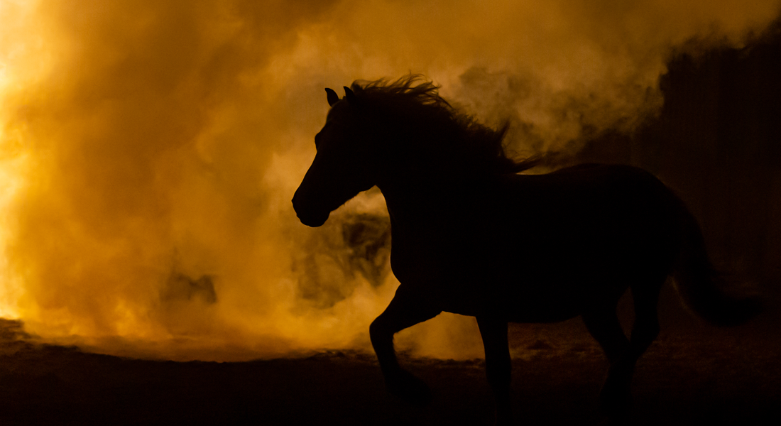Silhouette of horse in orange smoky air.