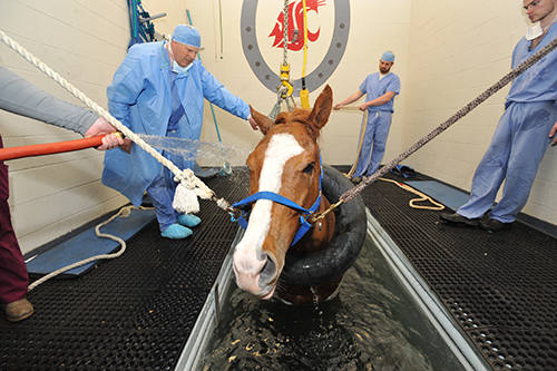 Horse in Water Treadmill
