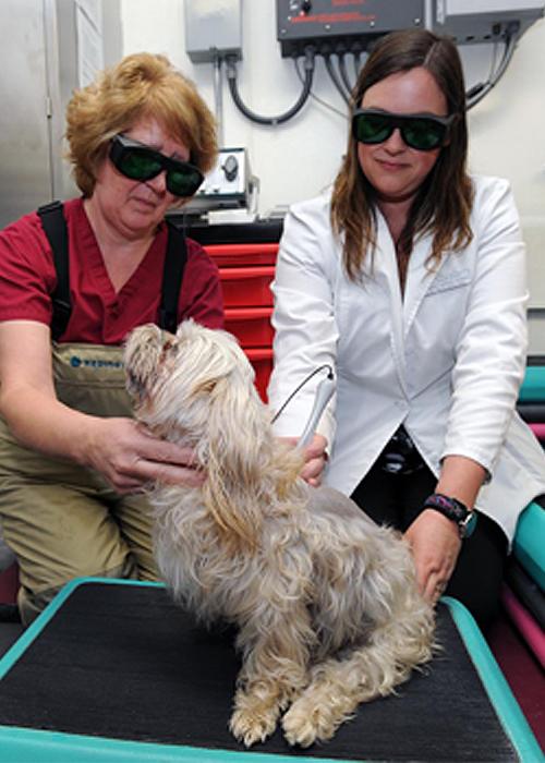 Dog getting ultrasound