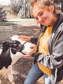 Student scratching calf's head