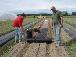 Various biodegradable mulches being laid over drip irrigation tape.