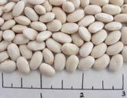 Beryl dry beans