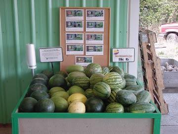 watermelons in a bin