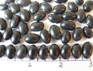 Black coco dry beans