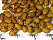 Borlotti dry beans