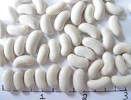 Cannellini dry beans