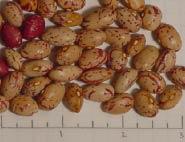 Celinas Romano dry beans