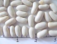 Dwane Baptistes dry beans