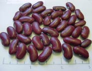 Fiero dry beans
