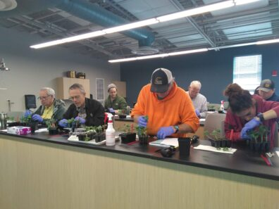 Participants are grafting watermelon in vegetable grafting workshop