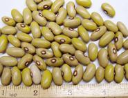 Ireland Creek Annie beans