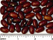 Kinto ki dry beans