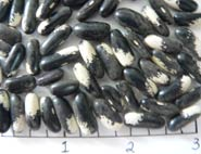 Magpie beans