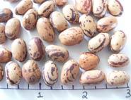 Mansell Magic dry beans