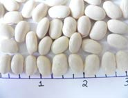 MarrowFat dry beans