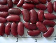 Montcalm dry beans