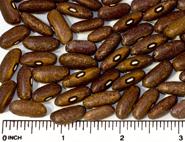 Mrocumiere beans