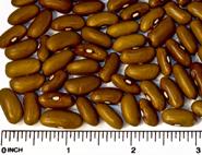 Norwegian beans