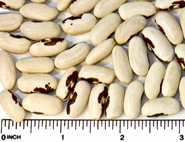 Old Fashioned Soldier beans