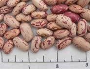 Krimson dry beans