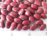 Red-Mexican dry bean