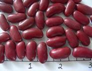 RedHawk dry beans