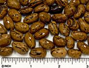 Serene dry beans