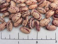 Supremo dry beans