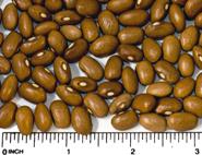 UI-537 dry beans