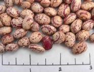 UI-686 dry beans