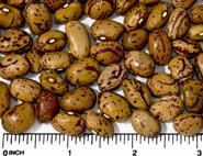 Volcano dry beans