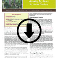 Growing dry beans in the home garden cover page