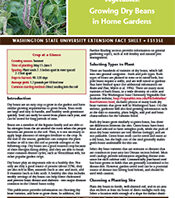 Growing dry bean in the home garden cover page
