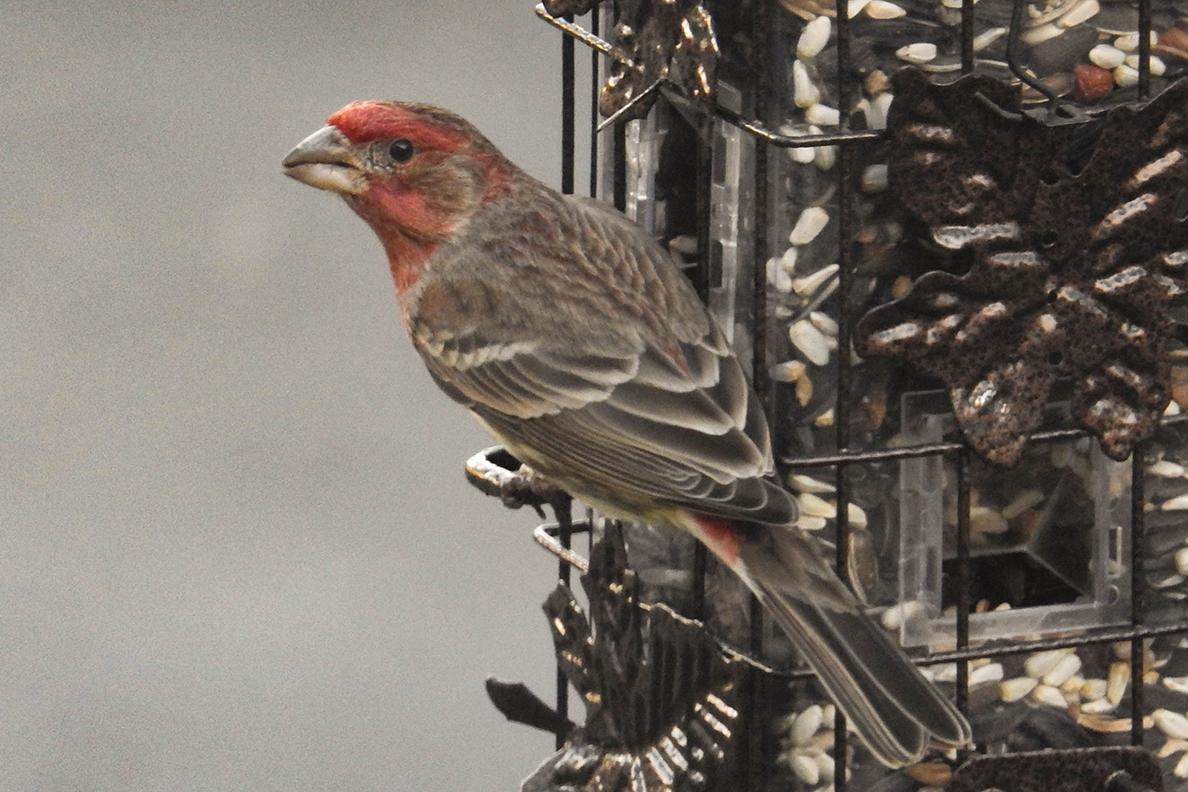 A finch sitting on a bird feeder.