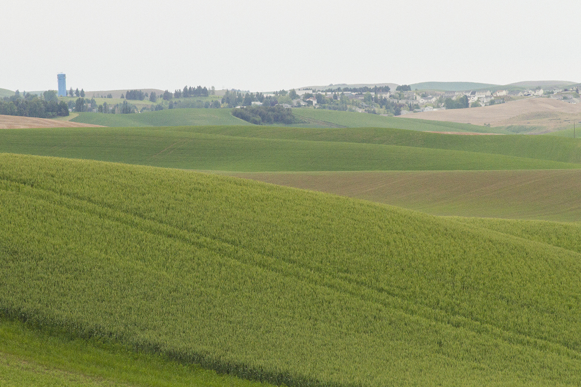 Green crops in hills of Palouse with Pullman in the distance.