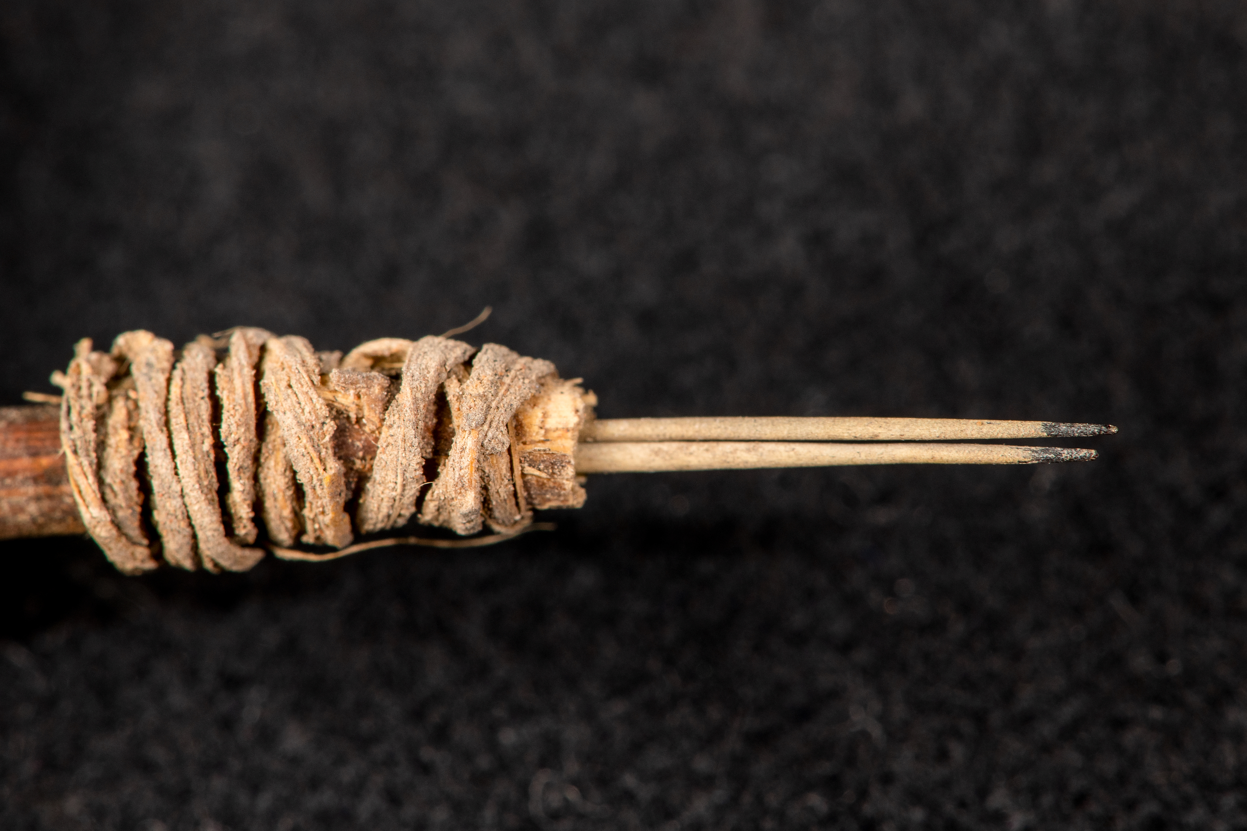 Closeup of 2,000-year-old cactus spine tattoo tool.