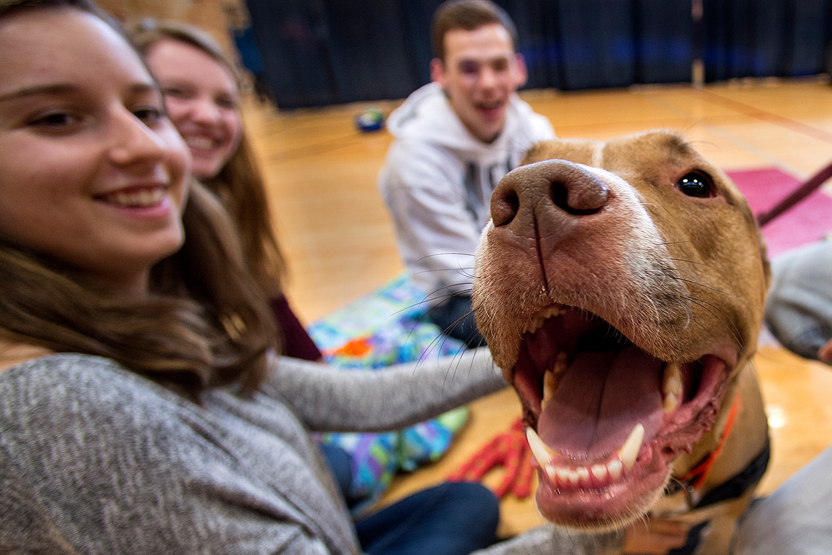 A group of students interact with a dog.