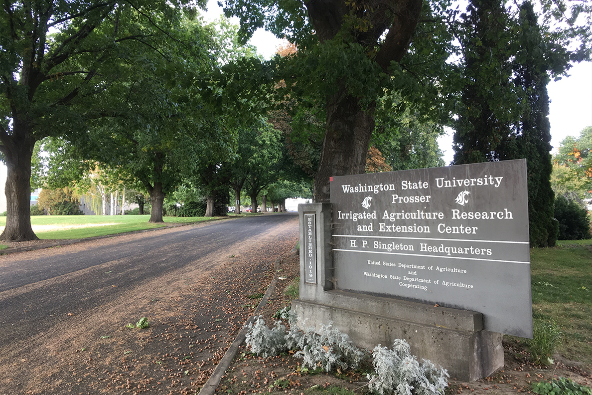 Entrance to the campus of WSU's Irrigated Agriculture Research and Extension Center.