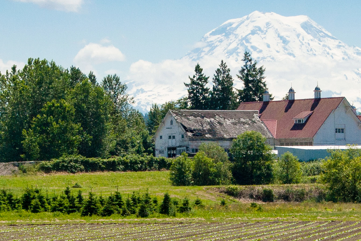 Farm ground at the WSU Puyallup Research and Extension Center with Mt. Rainier in the distance.