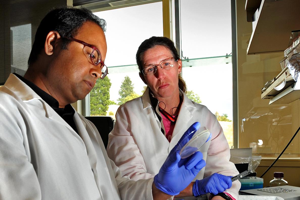 Researchers examining a petri dish.