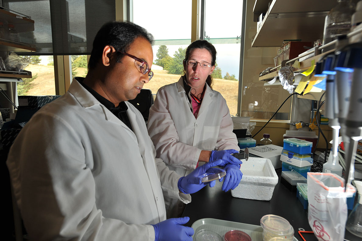 Two researchers examine samples in a lab