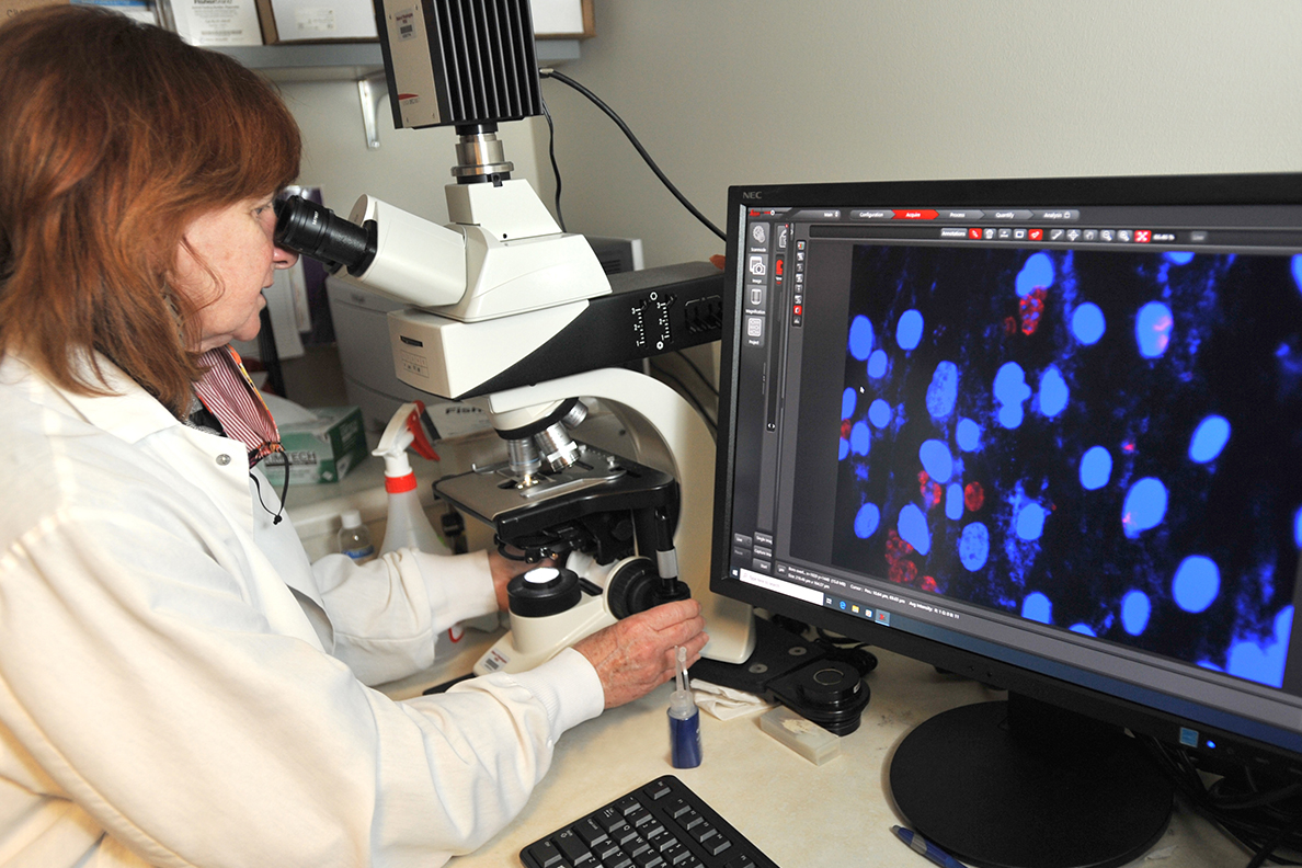 Roberta O'Connor using a microscope and computer.
