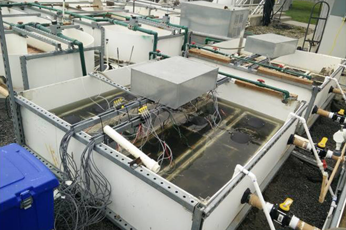A pilot wastewater treatment system