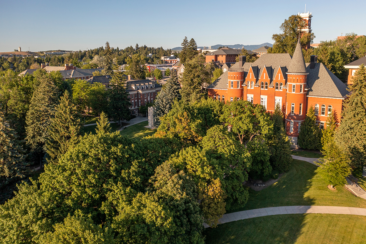 Aerial view of trees and buildings on the WSU Pullman campus.